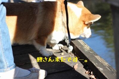 鯉ガン見の麦さん。