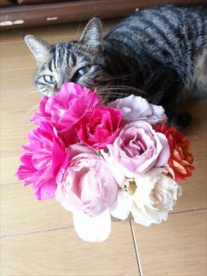 20150610よしおとバラ_R