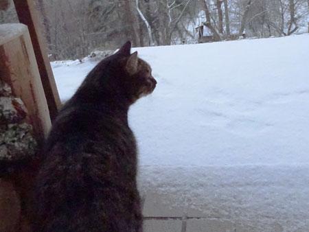 マロン、雪よ2