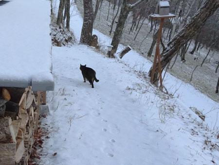 マロン、雪よ4