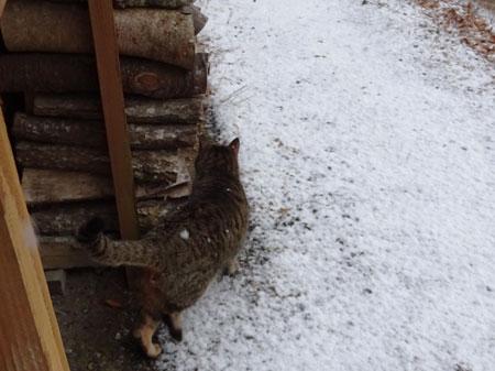 今朝も雪3