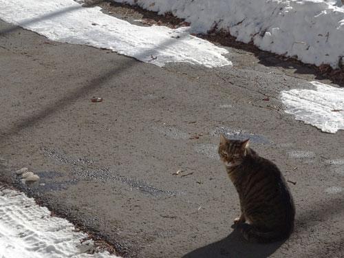 道路の雪がちょっと融けました!1