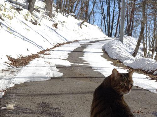 道路の雪がちょっと融けました!4