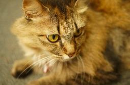 飼ってる猫の前で毒に苦しんでもがき死ぬフリするの楽しすぎwwwwwww