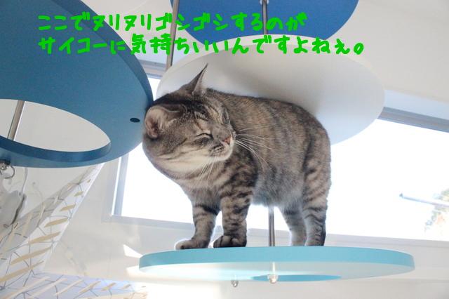 RbpTIbKOcCLjqBT1453803270_1453803365.jpg