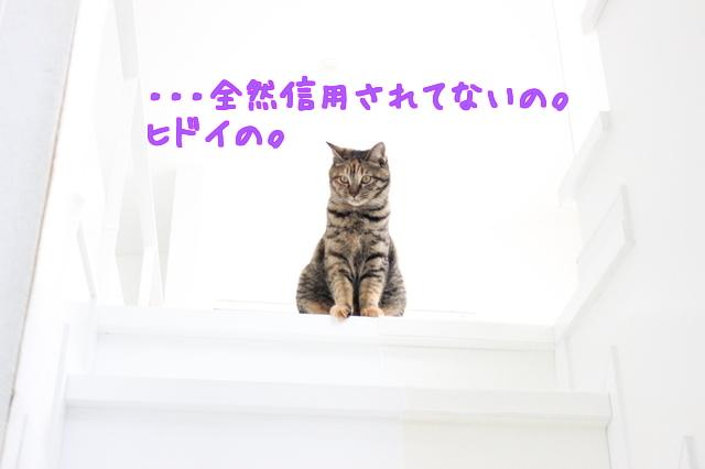 XW_xZ93svwQmBAI1454406951_1454407194.jpg
