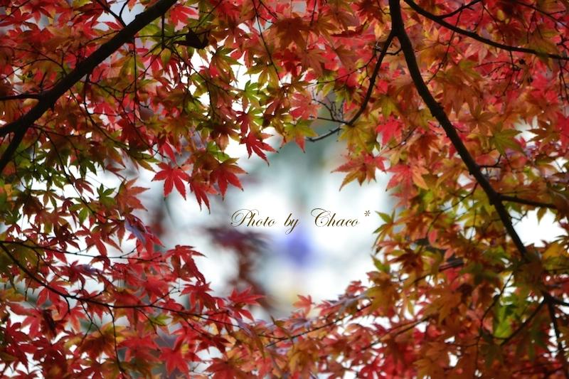 秋彩に囲まれて