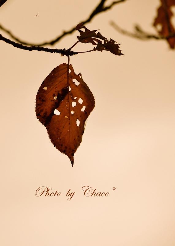 ひと葉の想い…