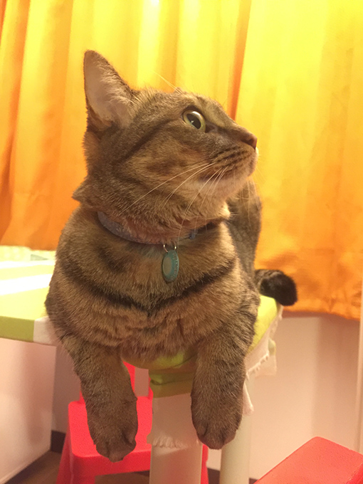 2015年08月03日撮影のキジトラ猫クーちゃん5