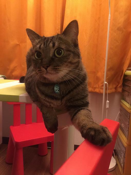 2015年08月03日撮影のキジトラ猫クーちゃん6