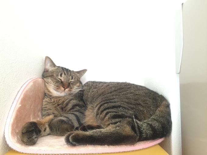 2015年08月05日撮影のキジトラ猫クーちゃん5