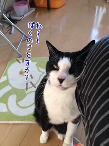 IMG_2261_2.jpg