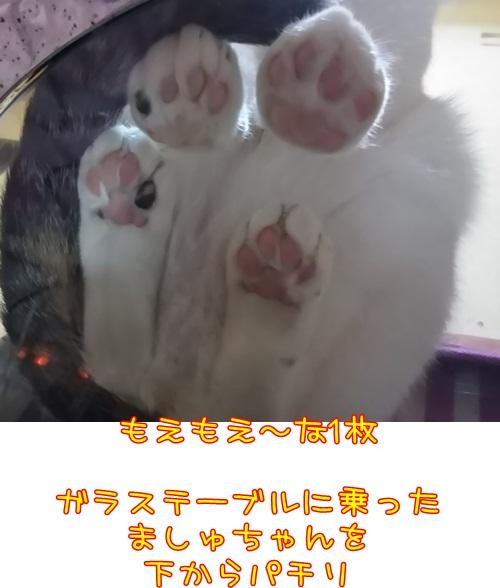 DSC_0377_201601031505317c6.jpg