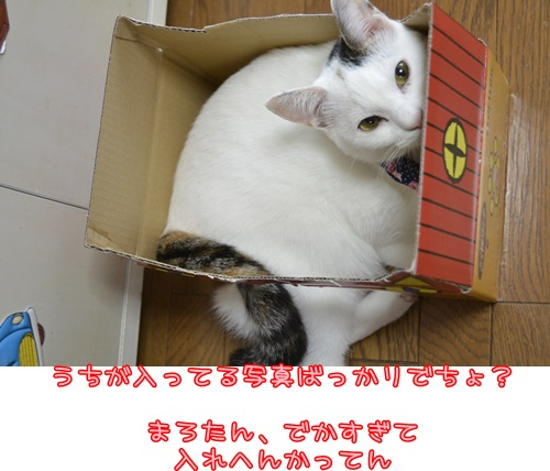 _DSC6874.jpg