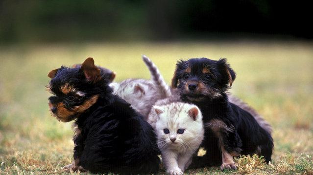 札幌市動物愛護管理条例案