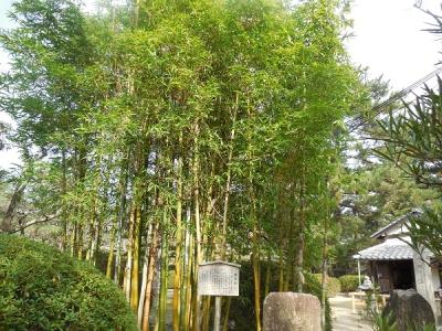 松陰神社(2)