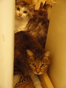 多頭飼育現場の猫たち④