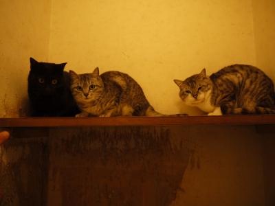 多頭飼育現場の猫たち③