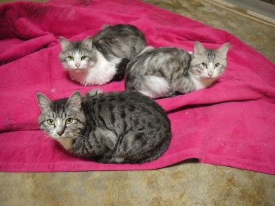 多頭飼育現場の猫たち②