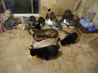 多頭飼育現場の猫たち①