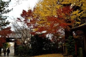 瑞厳寺の紅葉