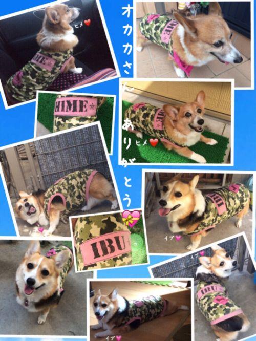 himeibu113.jpg