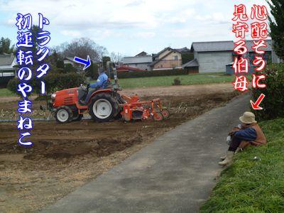 新年の畑仕事