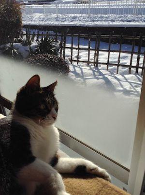 雪国の猫?