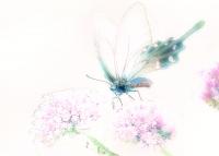 チョウ01