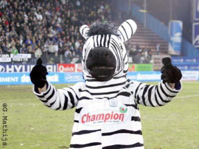 Royal Charlerois zebra