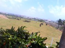 石垣牛・・・。