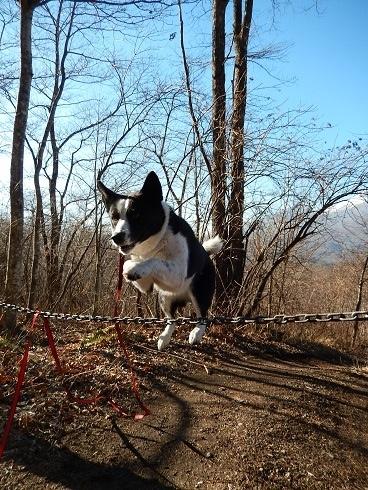 Tama Jump