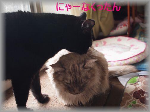 nya-nakuro_2016020718472671c.jpg