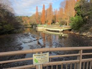 井の頭公園清掃