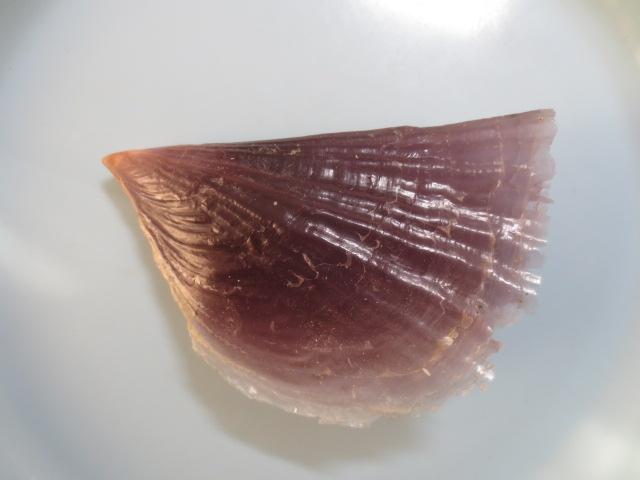 カゲロウガイ2