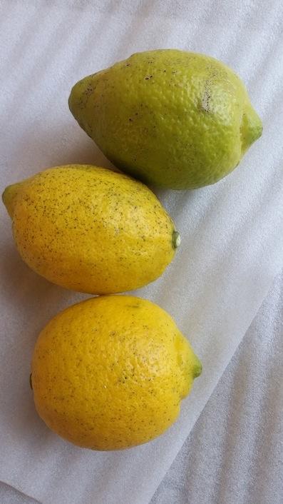澤田農園レモン