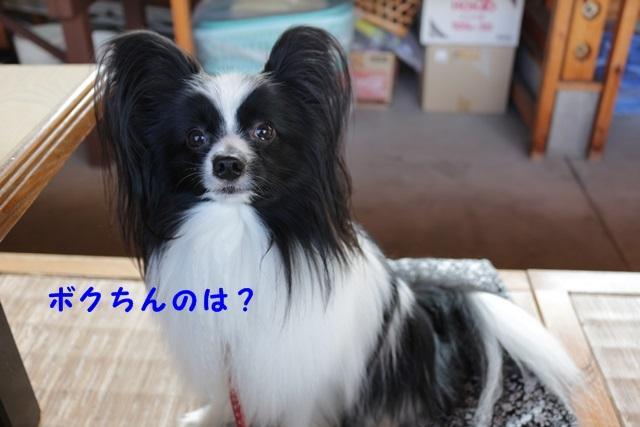 IMG_9876 - コピー