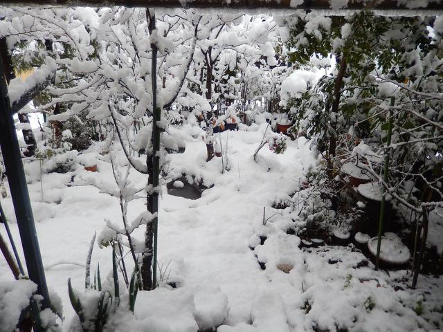 雪の朝(2015.1.1)