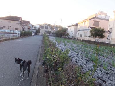 hatushimo2.jpg