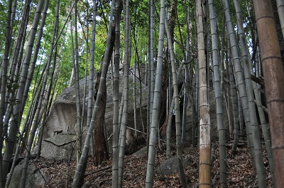 竹林の巨石