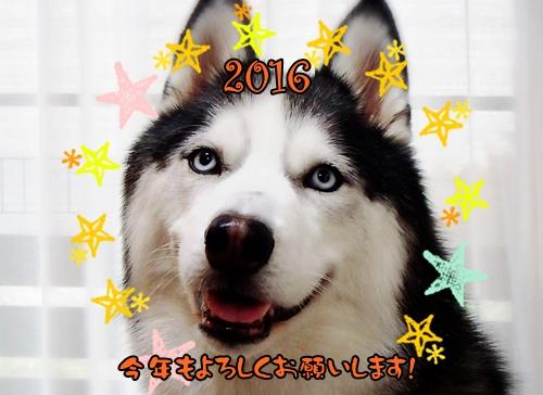 2016-01-05-10-52-21_deco.jpg