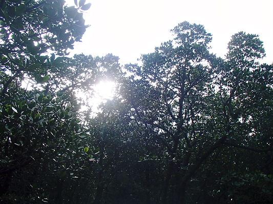 160125murakami4.jpg