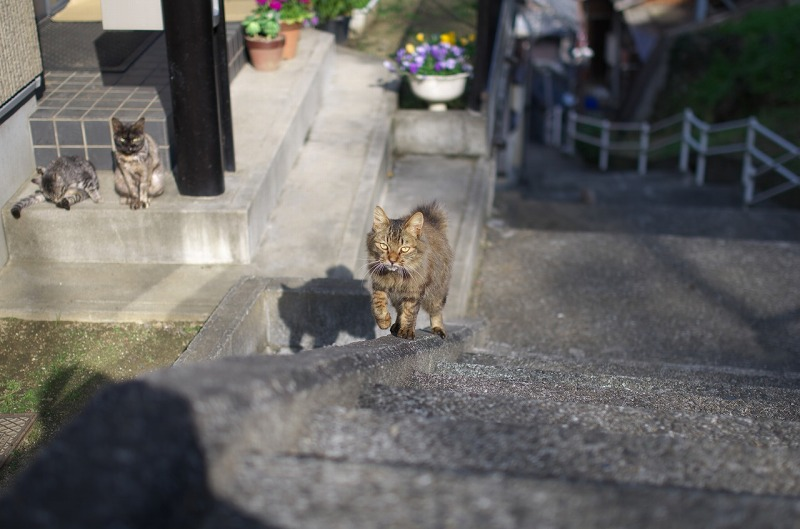 和歌山 漁村 猫