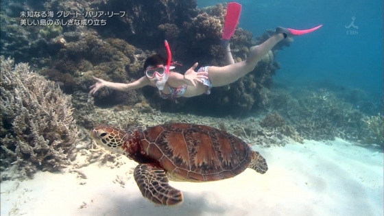 鉢嶺杏奈 水着ダイビング姿を披露した大島優子似ミステリーハンター 画像30枚 16