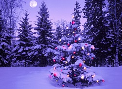 クリスマス風景