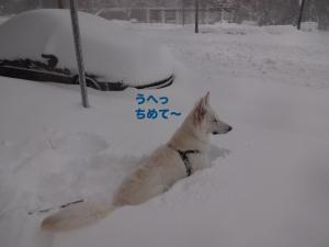 DSC03388blog.jpg