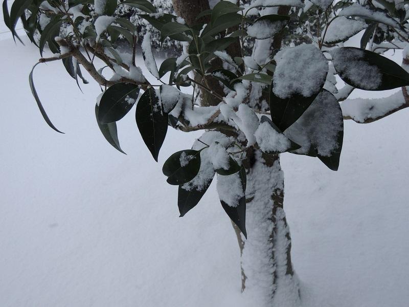 マンションの植え込みの積雪
