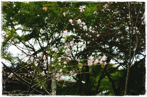 鎌倉1DSC01550
