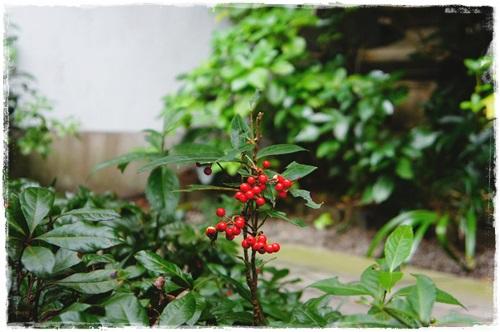 鎌倉1DSC01563