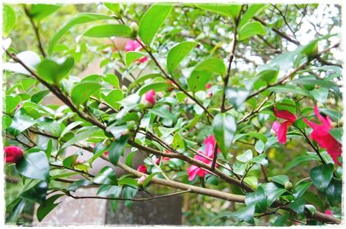 鎌倉1DSC01574